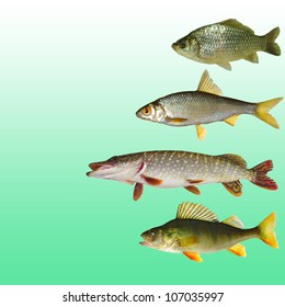 Collection of freshwater fish on green background.