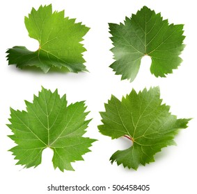 collection of grapes leaves isolated on the white background