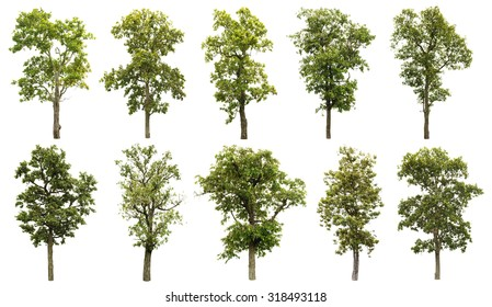 Collection of great tree isolated on white background