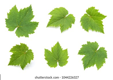 collection of green grape leaves isolated on white background