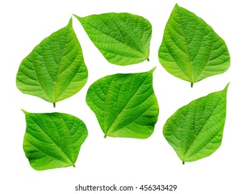 collection of green leaf isolated on a white background