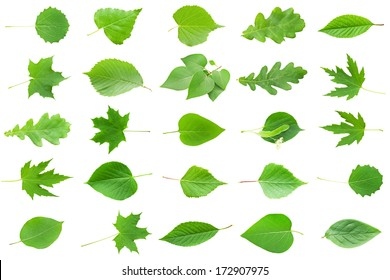 Collection of Green Leaves isolated on white background