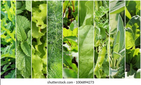 Collection of green leaves and vegetables. Spring backgrounds. Healthy eating consept. Gardening background