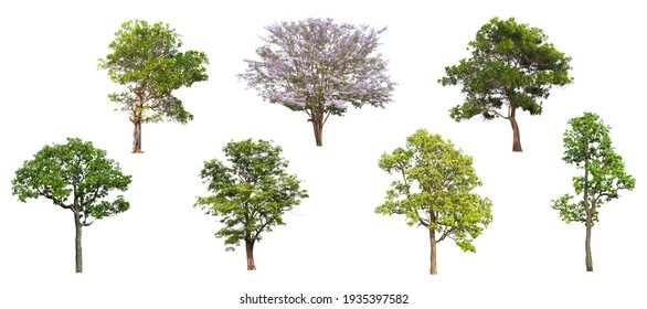 Collection of green tree side view isolated on white background  for landscape and architecture layout drawing, elements for environment and garden, tree elevation,blooming flower