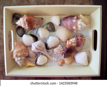 Collection of Gulf Of Mexico Seashells