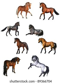 Collection of horses