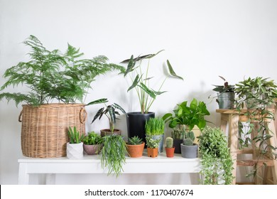 Collection of houseplants in room