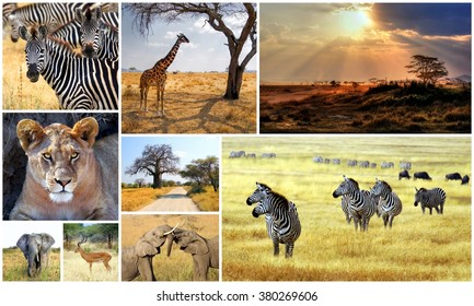 collection images from different animals taken during a safari in Africa