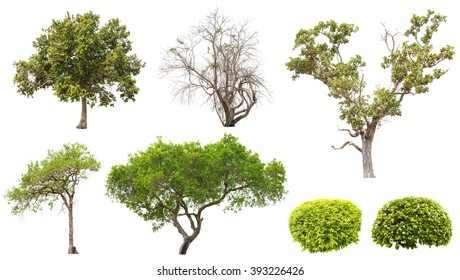 Collection of isolated tree and bush on white background