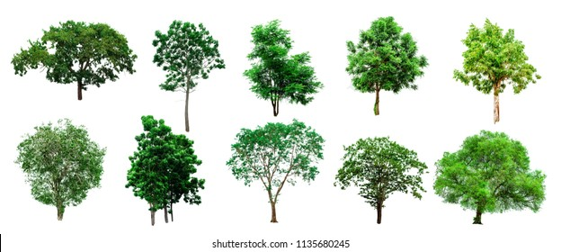 Collection of Isolated Trees on white background , A beautiful trees from Thailand