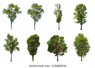 collection of isolated trees on white background, use for architectural design and decoration