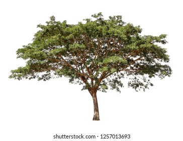 Collection of isolated trees on a white background. Beautiful tree It is suitable for use in decorating, decorating, and printing