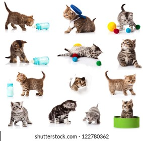 collection of  kitten isolated on white background.  A set of funny cats. British kittens collection
