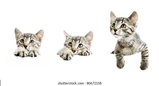 Collection of kittens above white banner isolated on white background with copy-space