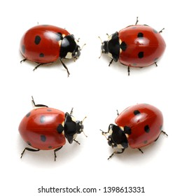 Collection of ladybugs isolated on white