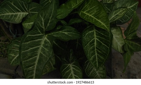a collection of leaves in the garden of the house