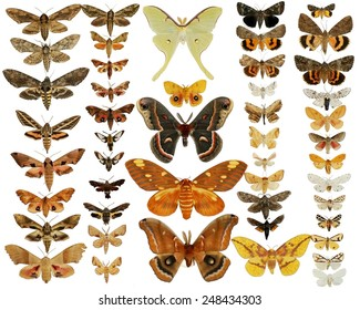 Collection of Moths Butterflies - Mounted North American Moths Butterflies - Giant Silk Moths, Sphinx Moths, Tiger Moths and Underwing Moths - the most popular and colorful moths of North America
