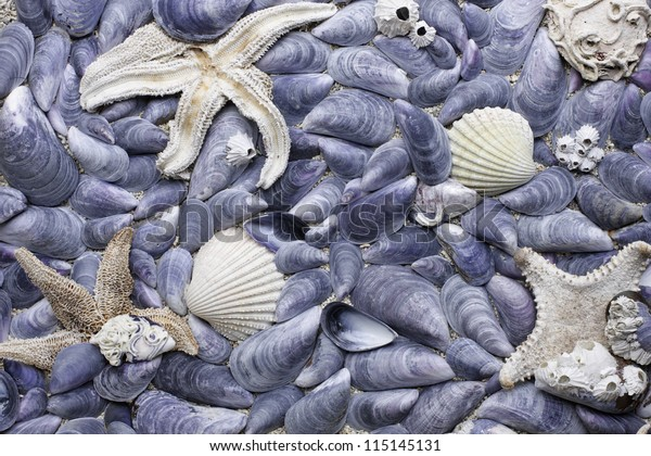 Collection of mussel shells and starfish picked at Norwegian coast. Close-up, daylight.