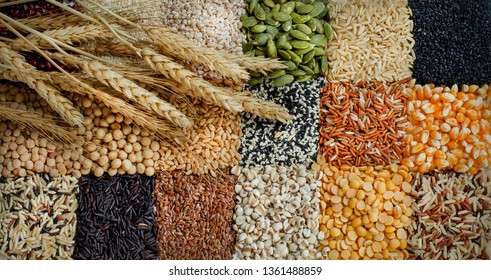 Collection of natural cereal and carbohydrate food background consisted of rice,millet,sesame,pumpkin seed,lentils,soybean,corn,barley,flax seed,job's tear,and decorated with dry wheat
