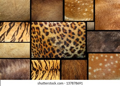 collection of natural textures - animal furry pelts
