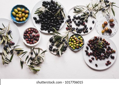 Collection Olive tree hedge different cultivars species overhead ripe olive fruits