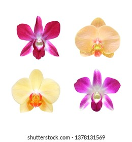 Collection of orchid flower isolated on white with clipping path