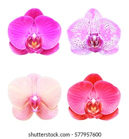 Collection  of orchid isolated on white background