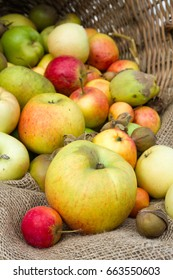 Collection of organic apples
