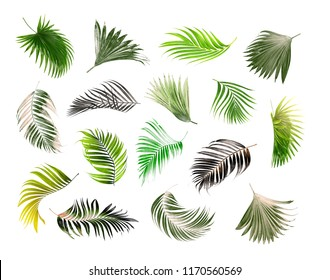 collection palm leaf on white background