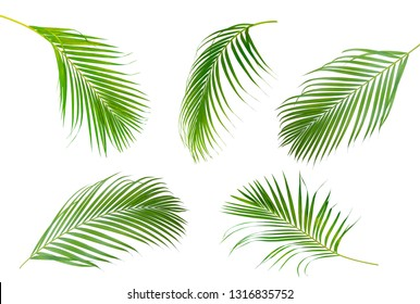 Collection of Palm leaf which sway isolated on white background