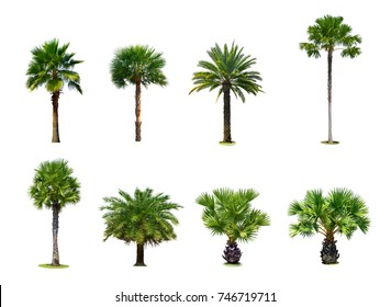 Collection of Palm tree isolated on white background for park or garden decoration, Set ten of ornamental plants