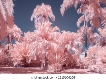 Collection of palm trees in pastel infrared color.
