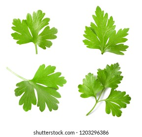 Collection of parsley isolated on white background. Top view.