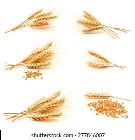 Collection of photos wheat ears and seed isolated on a white background