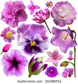 collection of pink and purple flowers isolated on white