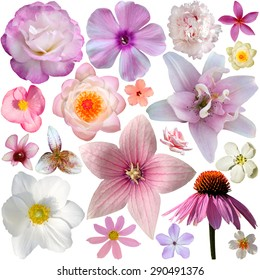 The collection of pink summer flowers isolated on white
