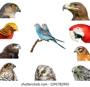 collection of portraits of birds on a white background