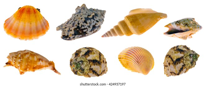 Collection of sea shells for aquarium, isolated on white background
