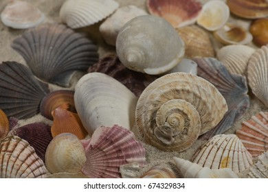 Collection of sea shells on white sand - North Fremantle, Western Australia