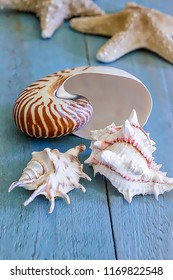 A collection of Seashell on a  blue  wooden surface.  Stock Image.