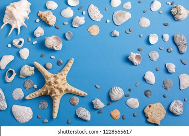 A collection of seashells on a blue background. The concept of flat lay of the site. Place under your text.