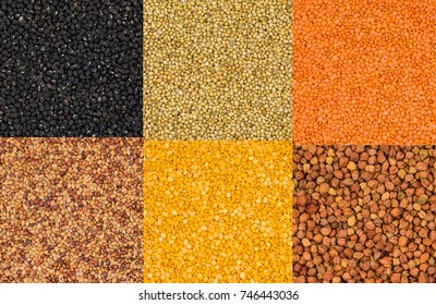 Collection of Seeds in Black Gram or Black Mung, Dried Coriander, Red Lentils or Masoor Dal, Yellow Split Dal, Mogar Dal, Mung Dal, Black Chick Pea or Kala Chana.
