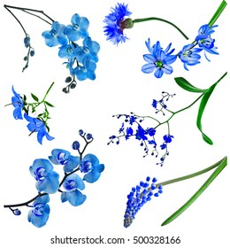 Collection set of blue color flowers isolated on white background