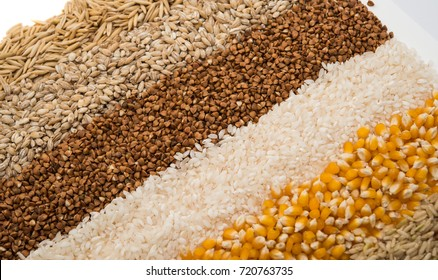 Collection Set of Cereal Grains: Wheat, Barley, Oat, Corn, Millet, Rice, Buckwheat, closeup