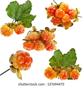 Collection set of cloudberry close up isolated on white background