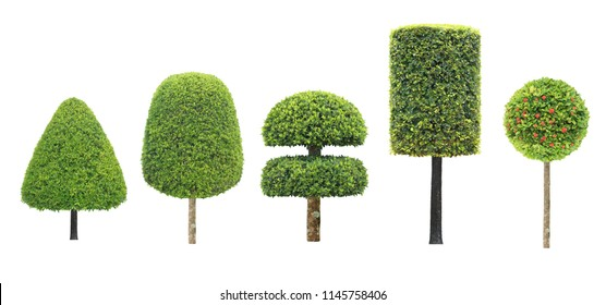 collection set of different shape of topiary tree isolated on white background for formal Japanese and English style artistic design garden