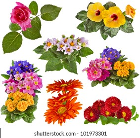 Collection set of Flowers Bouquet: Rose, Hibiscus, Potato, Primrose, Gerbera, Daisy close up isolated on white background