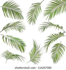 Collection set of green palm leaves isolated