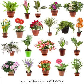 collection set of  houseplants in flower pot, isolated on white background