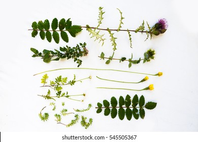 Collection set of wild forest  plants fruits flowers isolated on white background